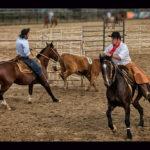 Ranch Sorting tem primeira final oficializada pela ABCCC