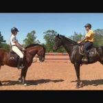 Cavalo crioulo é destaque em competição de salto