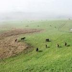 Cabanha do Parque: a beleza e qualidade dos cavalos crioulos
