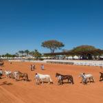 Brasília confirma Freio de Ouro, Proprietário e Jovem