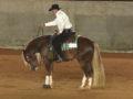 Loirinho deve ser o próximo cavalo crioulo a embarcar para os EUA