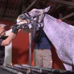 A importância da odontologia equina para o sucesso do cavalo atleta
