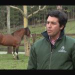 Programa Cavalo Crioulo Sem Fronteiras – Registro de Mérito