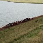 Conheça os cavalos de ferro da Cabanha 5 Salsos