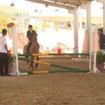 Cavalo crioulo ganha espaço em provas de hipismo