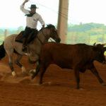 10 cuidados com o cavalo de laço