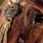 Artista faz peças sobre a cultura gaúcha e o cavalo crioulo