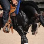 Morre cavalo crioulo recordista das rédeas há 19 anos