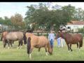 Um leilão de cavalos crioulos promovido somente por mulheres
