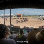 Quase 90 cavalos crioulos competem no Bocal de Ouro 2019
