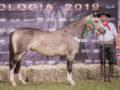 Exposição em Campo Grande consolida Cavalo Crioulo em Mato Grosso do Sul