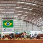 Expolondrina recebe Exposição Passaporte do Cavalo Crioulo