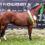 Alto nível marca Exposição Passaporte do Cavalo Crioulo em Londrina
