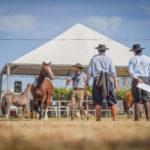 Mato Grosso recebe a última Passaporte do ciclo do Cavalo Crioulo