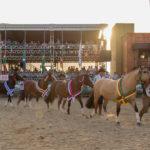 Nacional da Morfologia terá mais de 200 Cavalos Crioulos na Expointer